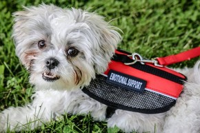 Addressing the Growing Concerns About Emotional Support Animal Use